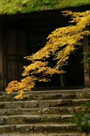 黄葉の法然院山門!(091129)