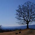 写真: この木、何の木!
