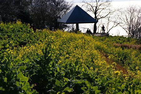 菜の花畑、丘の上!