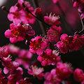 Photos: 鮮やかな紅千鳥2!(100220)