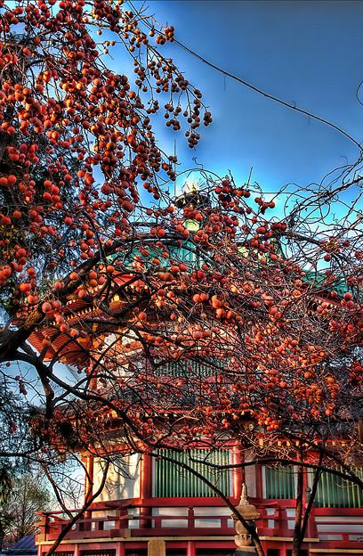 弁天堂と柿の木