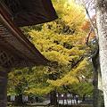 Photos: 広徳寺本堂いちょう山門