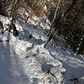 写真: 100116-37大岳山・馬頭刈尾根 急な下り