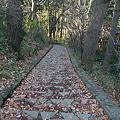 Photos: 101215-64高尾山の下り