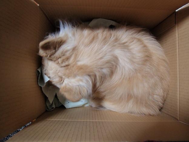 写真: 箱犬