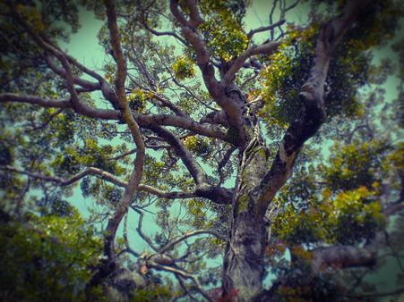 見下げる木