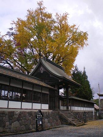 阿蘇神社の銀杏