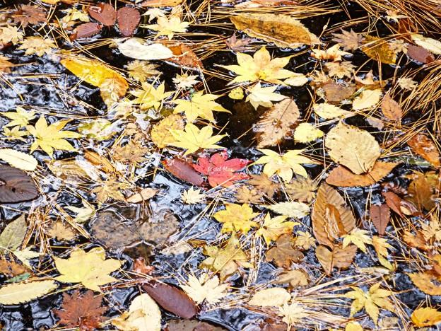 水の中の秋