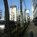 Photos: さくら通り - 桑野 - 1