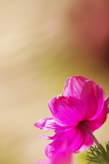 花の見る方へ