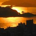写真: 黄金色の海