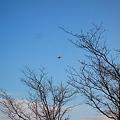 Photos: 鳥のように(3)