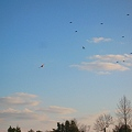 Photos: 鳥のように(2)