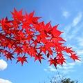 燃え立つ紅葉