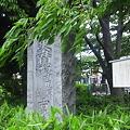 Photos: 江古田公園 (中野区松が丘)