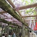 11.05.03.久伊豆神社(越谷市)