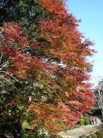 御船山楽園の紅葉(13)