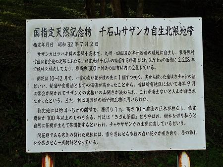道の駅吉野ヶ里~干石山のサザンカ(8)