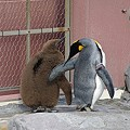 Photos: ペンギン親子
