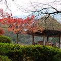 丹波 高源寺?