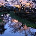 Photos: 兼六園 花見橋より(満開の桜と杜若の若葉)