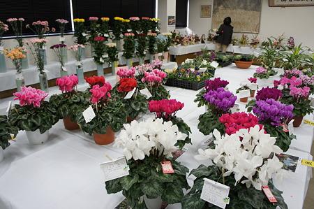花の品評会