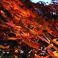 Photos: 紅葉の壁