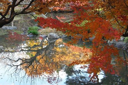 水面の紅葉