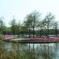 Photos: 芝桜フロート