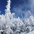 Photos: 凍る木々