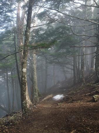 雪がない登山道