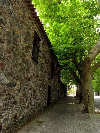 街路樹の緑