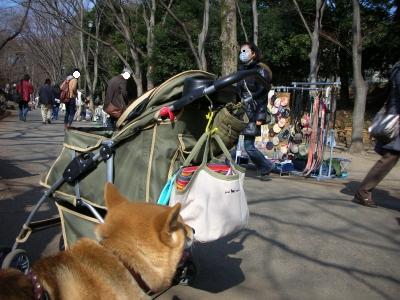 写真: 犬服屋さん