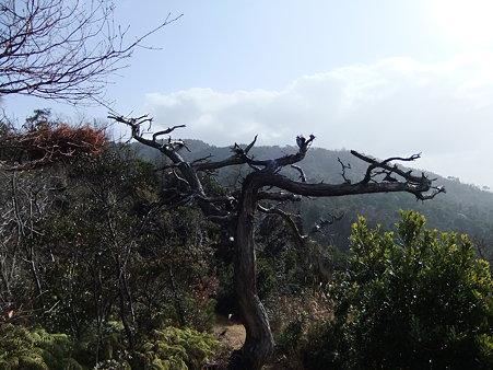バクチ岩への登り途中2