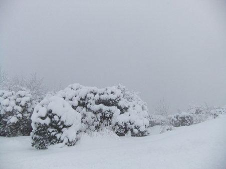 白木山山頂2