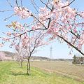 写真: <越辺川*桜景色 in 2010>