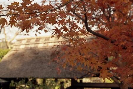 東慶寺の紅葉 01