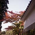 写真: 円覚寺の紅葉 二眼編 03