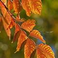 写真: 砧公園・紅葉