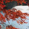写真: 井の頭公園・紅葉02