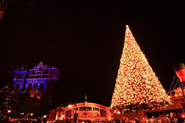 写真: 夜のクリスマスツリーとタワー・オブ・テラーです。