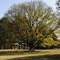 Photos: 気になる木