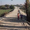 Photos: ルクソール西岸 畑の中の道